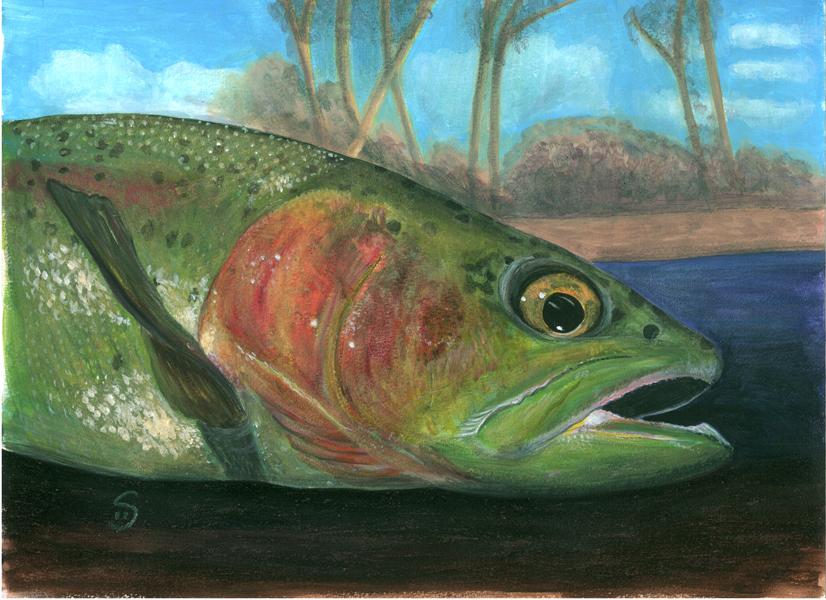 shelly-dax-fish