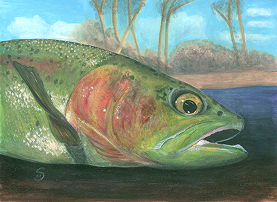 fish painting shelly dax