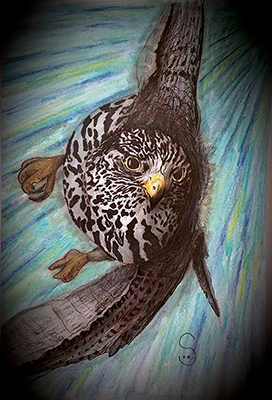 bird flying drawing shelly dax