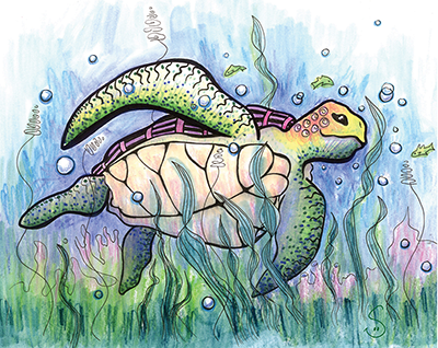 turtle drawing shelly dax